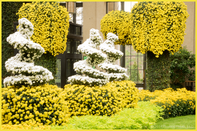 Longwood Gardens Chrysanthemum Festival