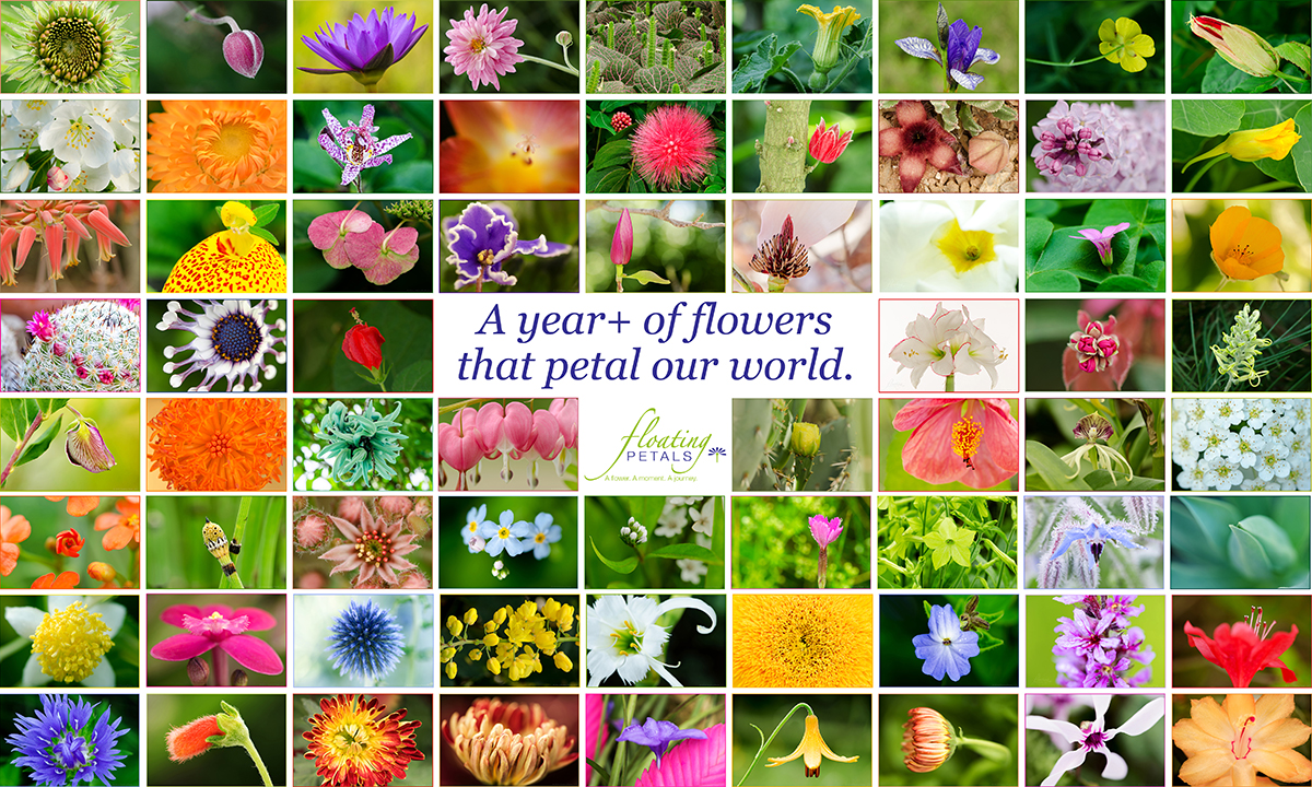 That petal our world.