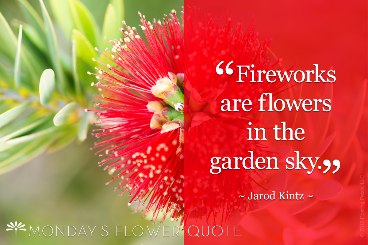 Fireworks are flowers in the garden sky