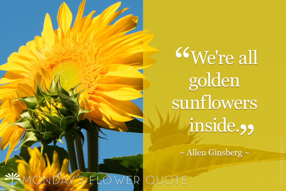 We are all golden sunflowers inside