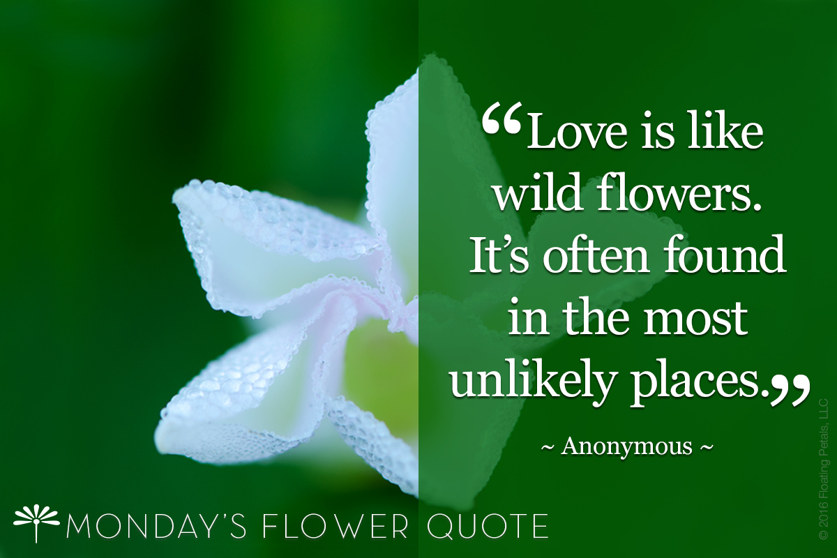Love is like wild flowers
