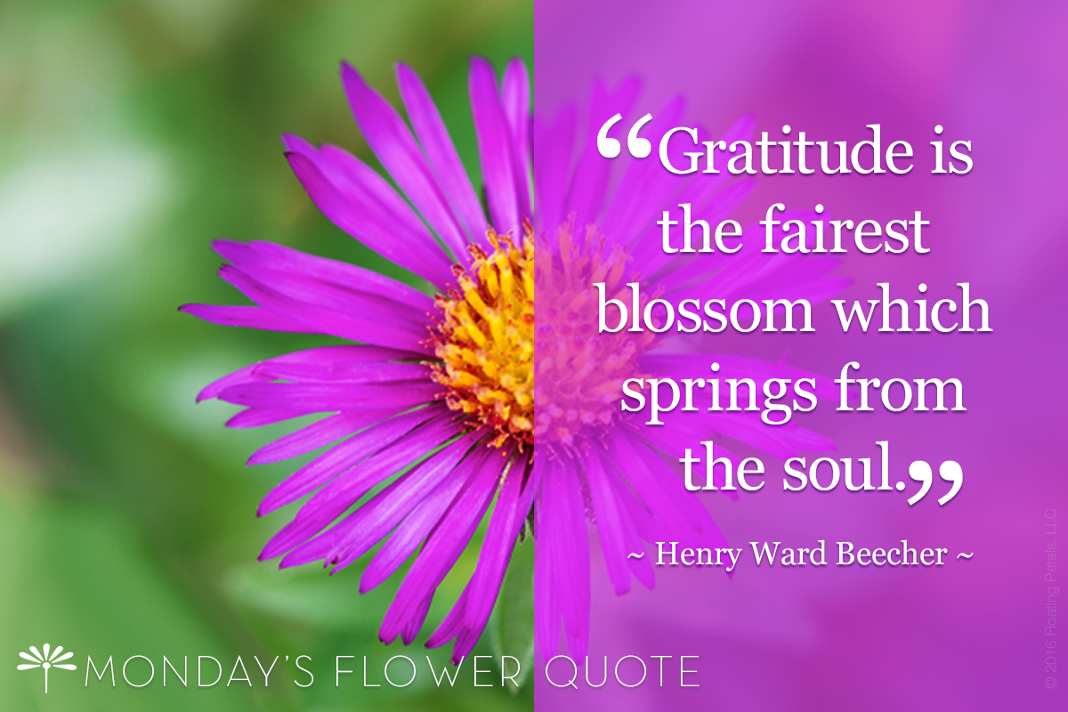 Gratitude is the fairest blossom