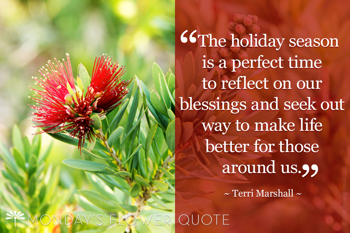 Flower Quote The Holiday Season