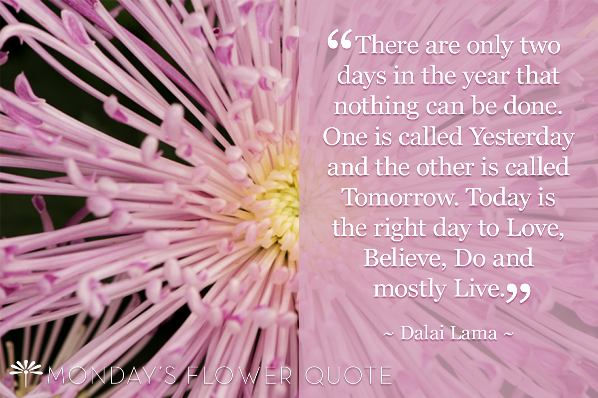 there are only two | Monday's flower quote