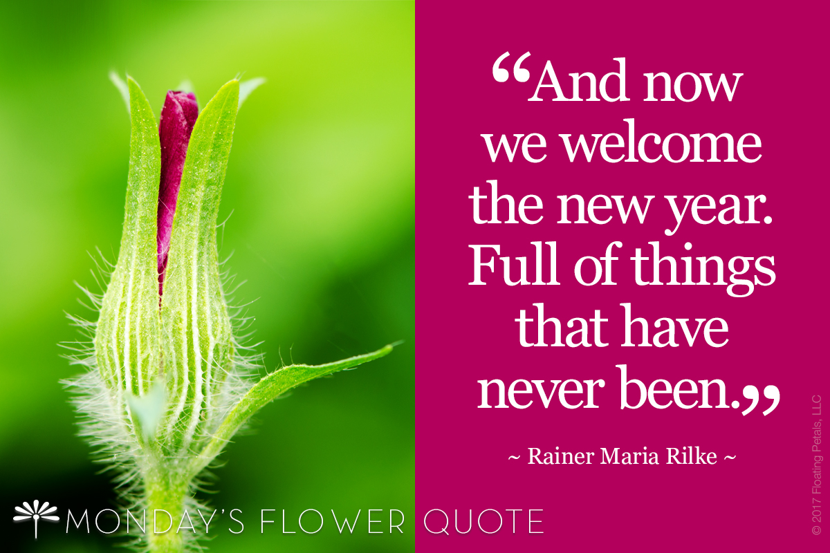 Flower Quote: And Now We Welcome The New Year