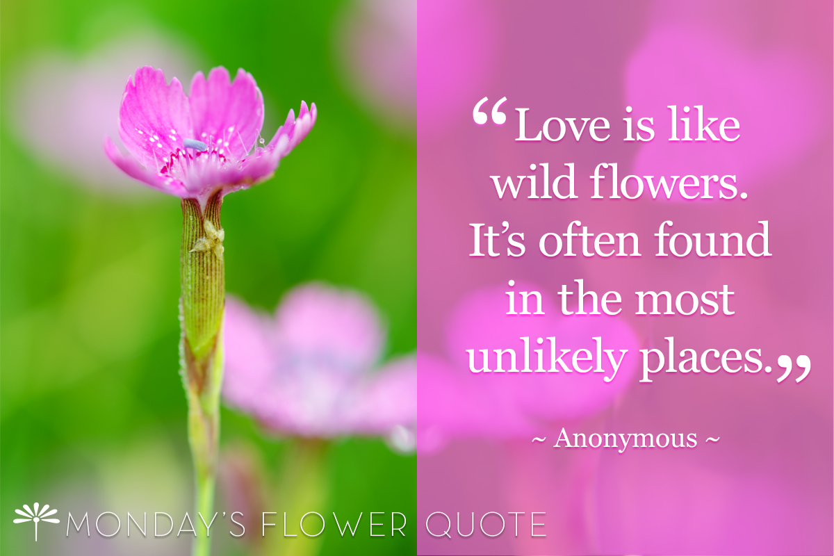 Love is like wild flowers | Flower Quote