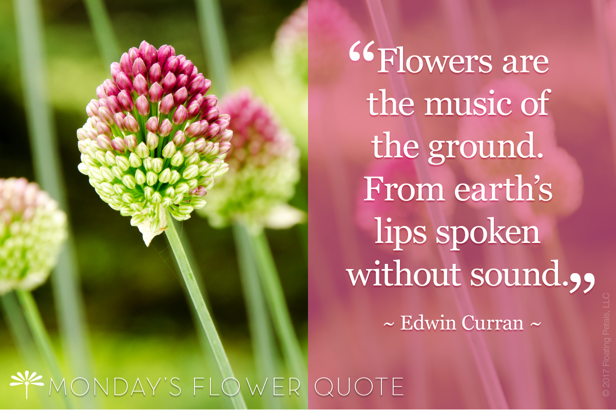 Flowers are the Music | Flower Quote