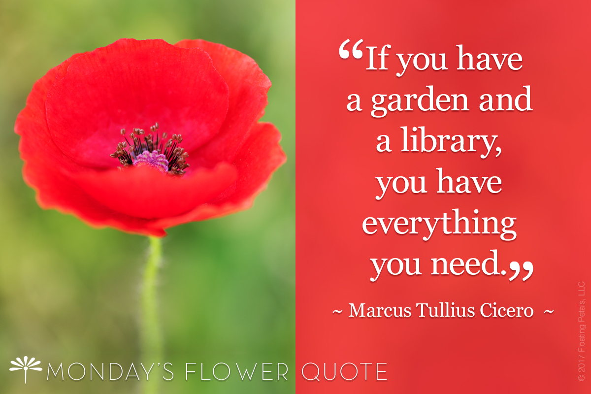 If You Have A Garden | Flower Quote