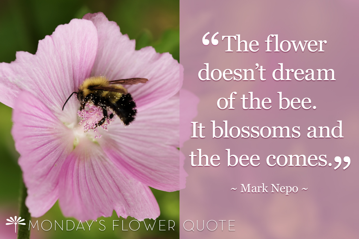The Flower Doesn't Dream | Flower Quote