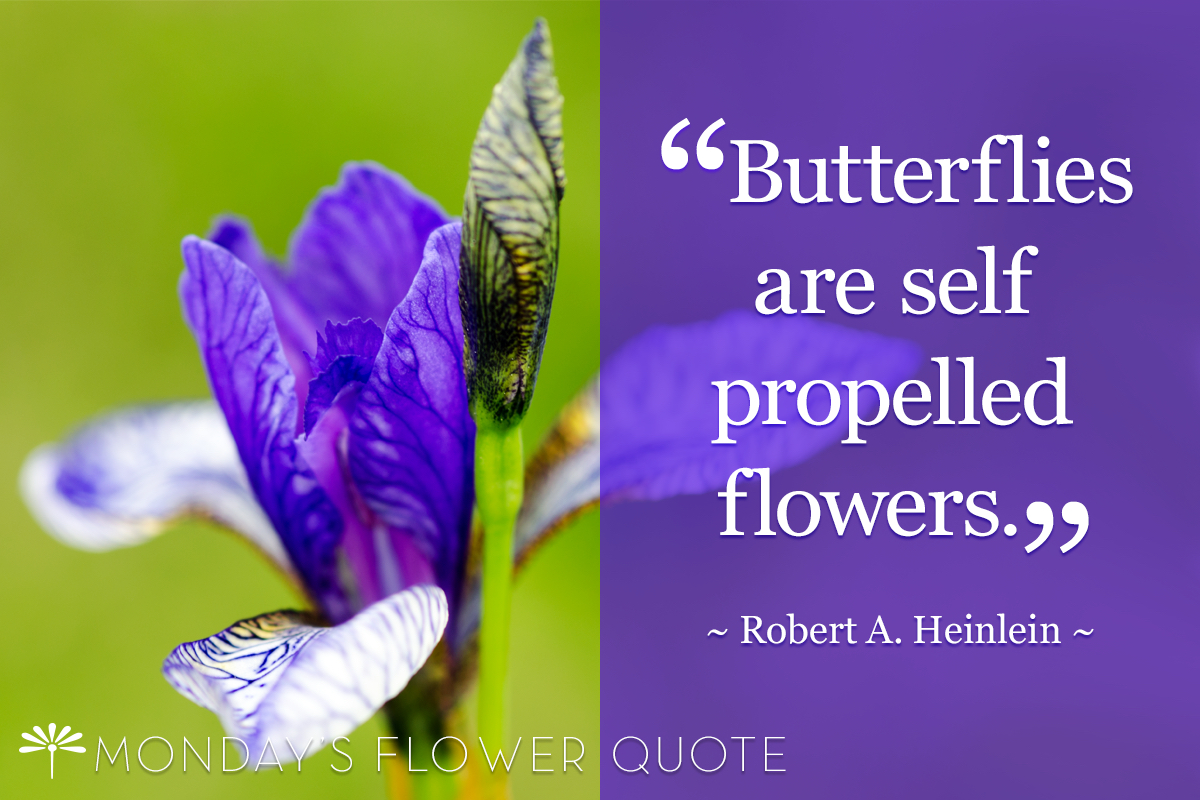 Flower Quote Butterflies