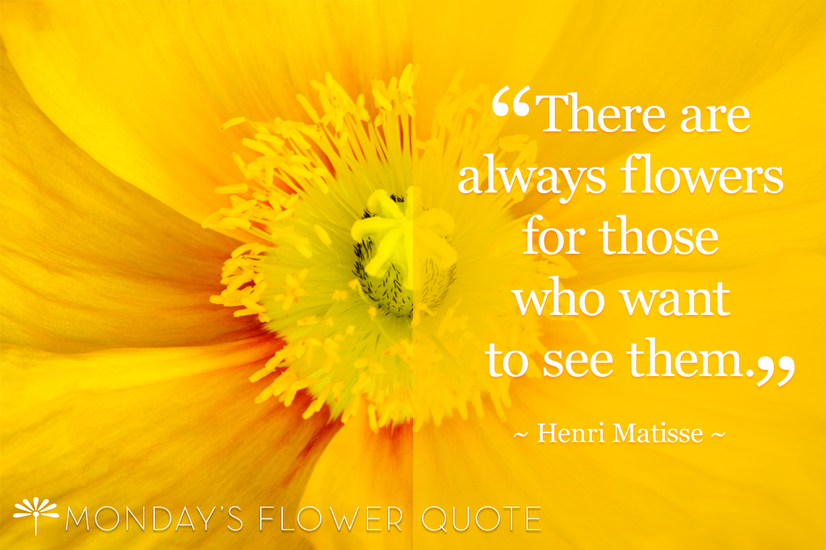 Flower Quote | There Are Always Flowers