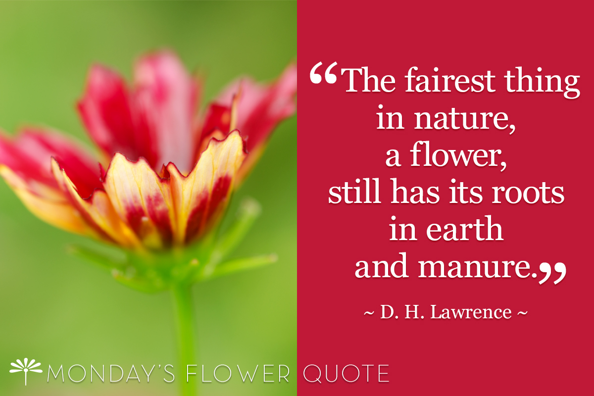Flower Quote Fairest