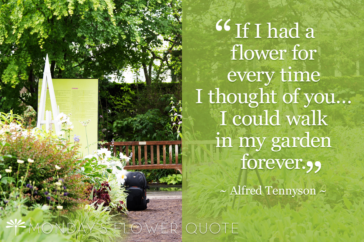 Flower Quote | If I Had A Flower