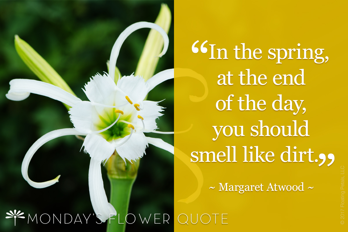 Spring Time Flower Quote