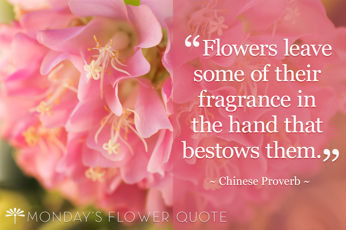 Great Mondayu0027s Flower Quote | Flowers Leave Some