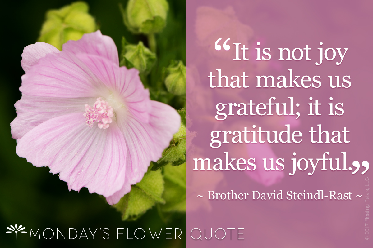 Monday's Flower Quote | It is not joy that makes us grateful