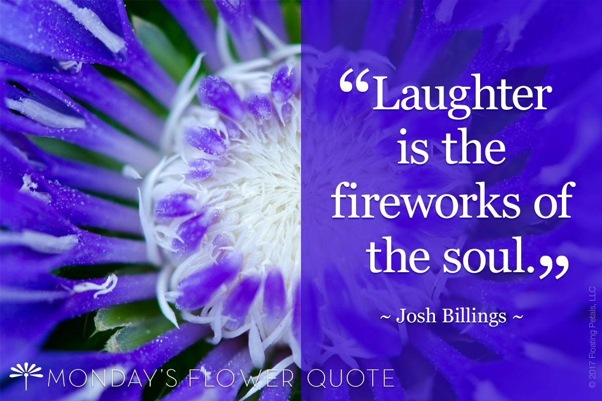 Flower Quote Laughter Is The Fireworks