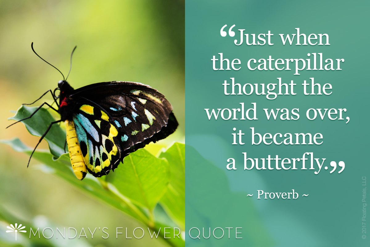 Caterpillar Thought The World Was Over Flower Quote Floating Petals