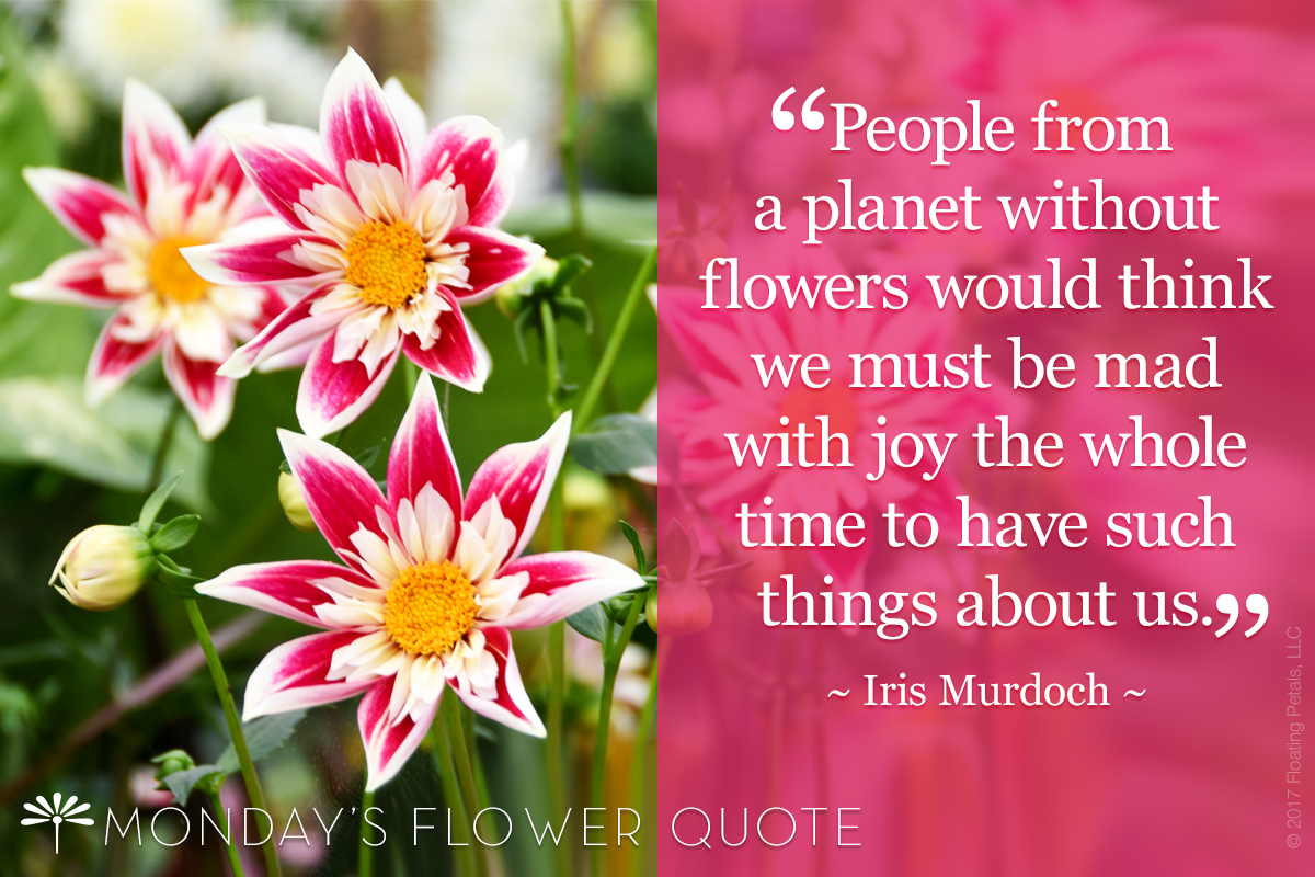 Flower Quote People From A Planet Without Flowers