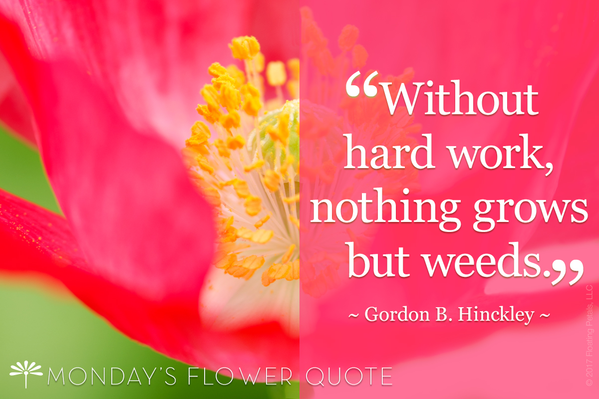 Without Hard Work Nothing Grows But Weeds