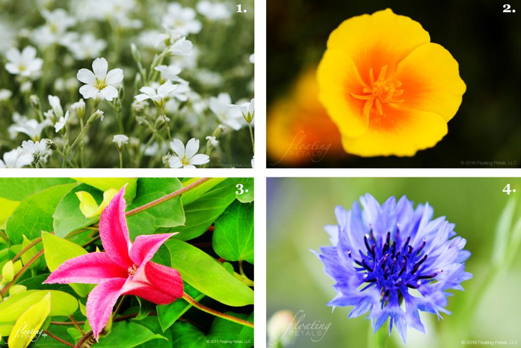 4 Summer Flower Tidbits