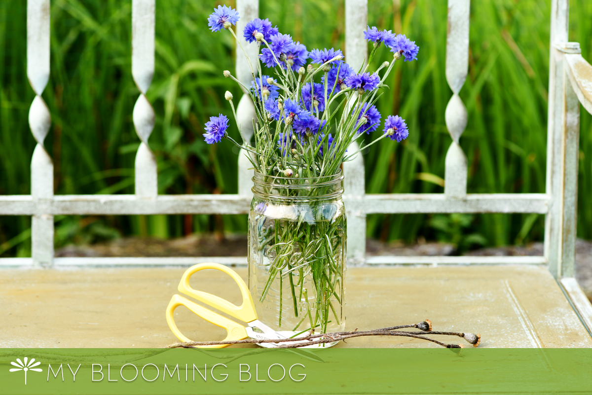 4 Summer Flower Tidbits