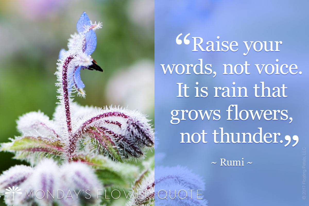 Raise your words not your voice - Rumi
