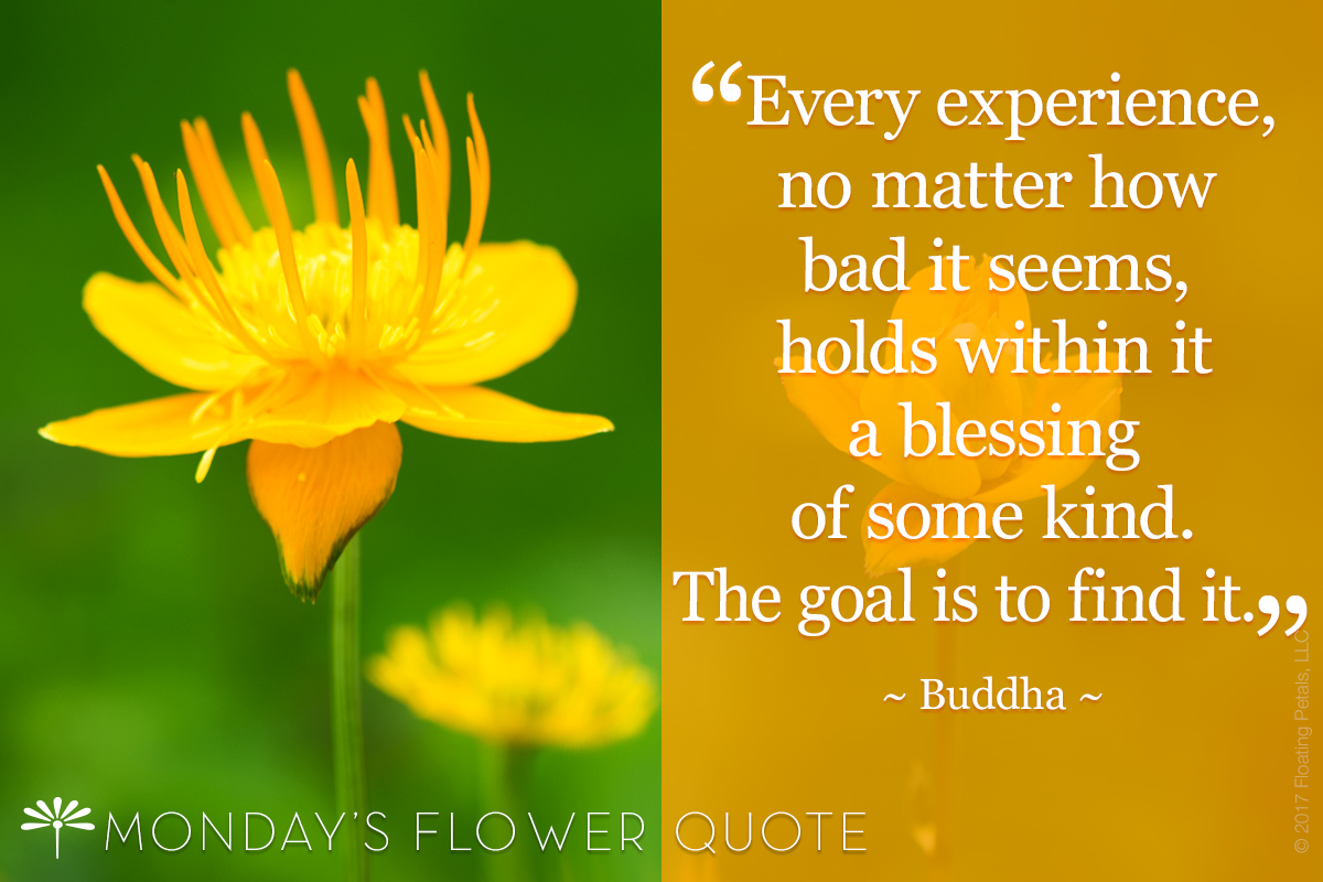 Every Experience No Matter How Bad It Seems Buddha