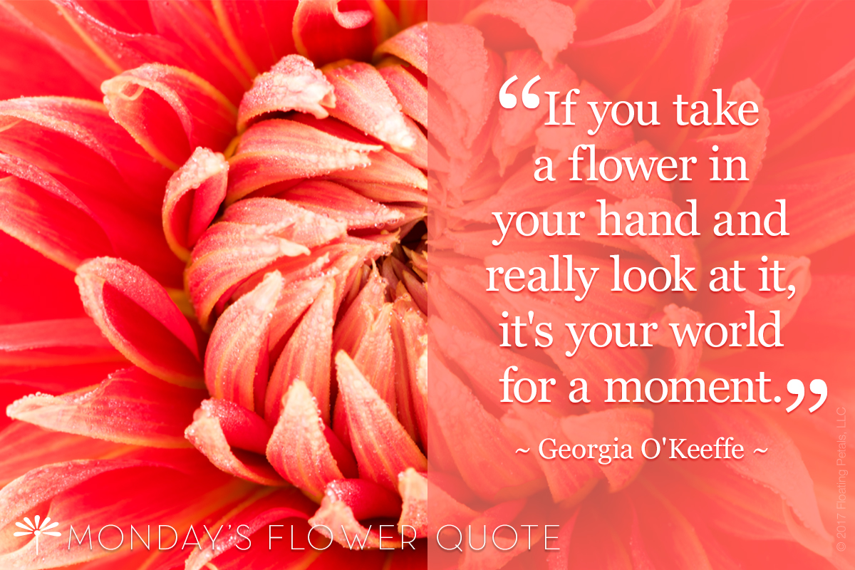 Monday's Flower Quote | If You Take A Flower In Your Hand - Georgia O'Keeffe