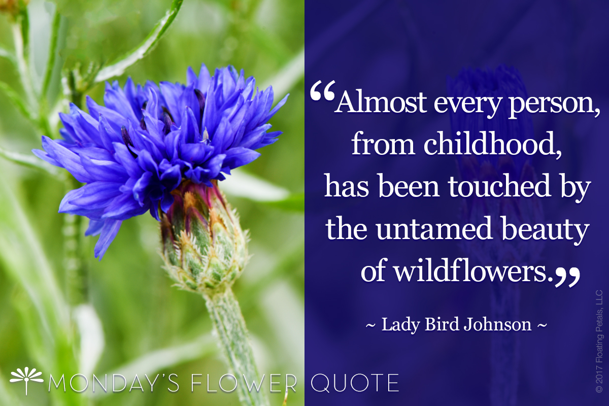Almost Every Person From Childhood - Lady Bird Johnson