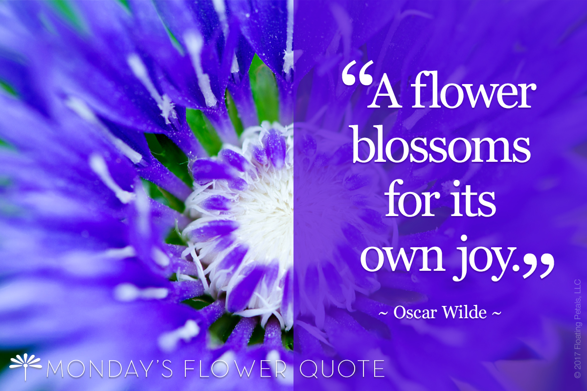 Flower Quote: A Flower Blossoms for Its Own Joy