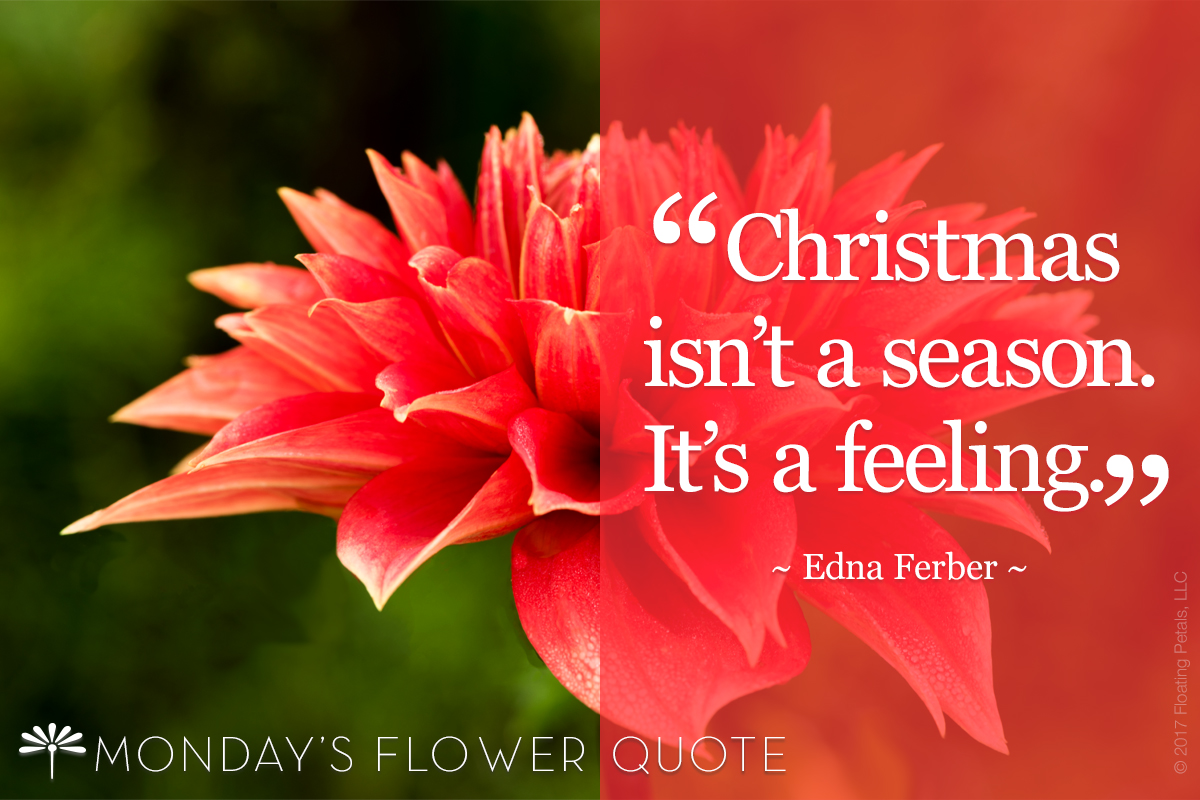 Flower Quote: Christmas Isn't A Season. It's A Feeling.
