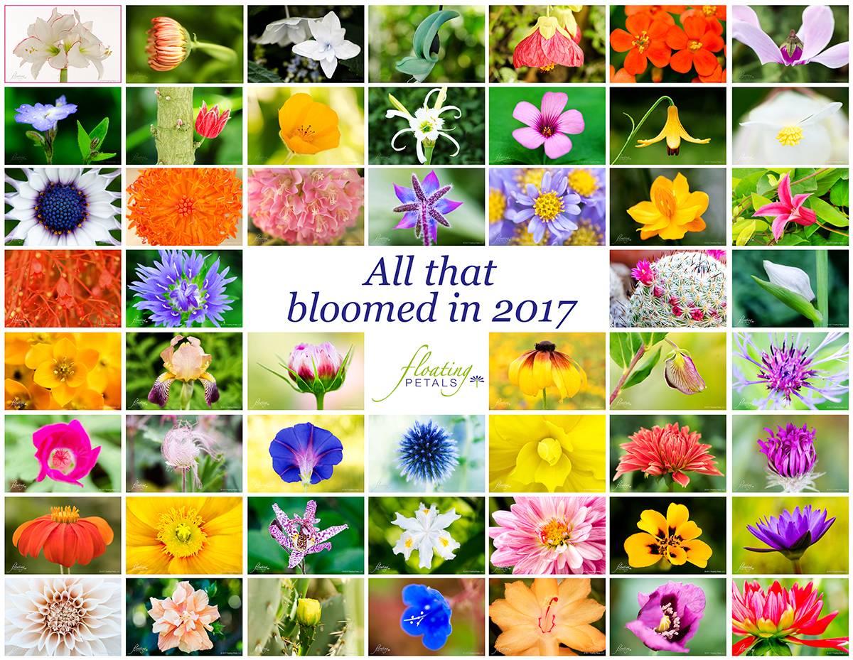 All that bloomed in 2017