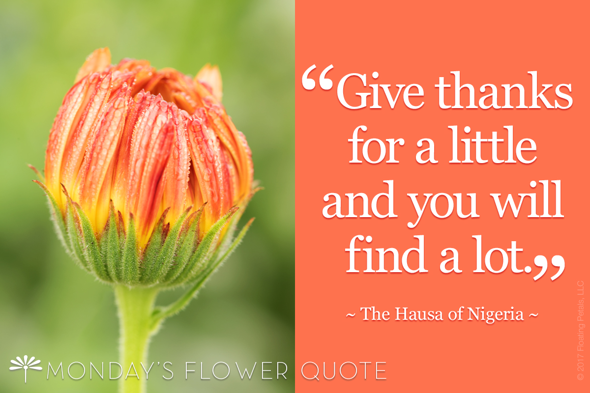 FLOWER QUOTE: GIVE THANKS FOR A LITTLE