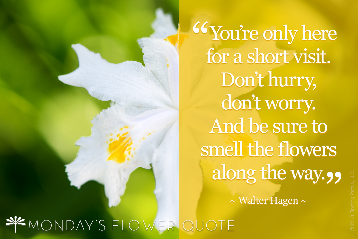 Mondays Flower Quote Archives Page 4 Of 12 Floating Petals