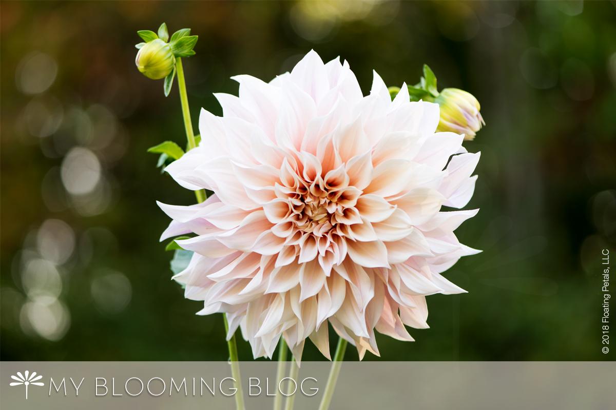 Anna's Blooms