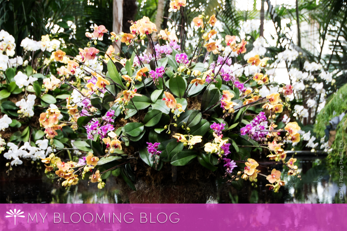 How to Grow and Maintain Orchids