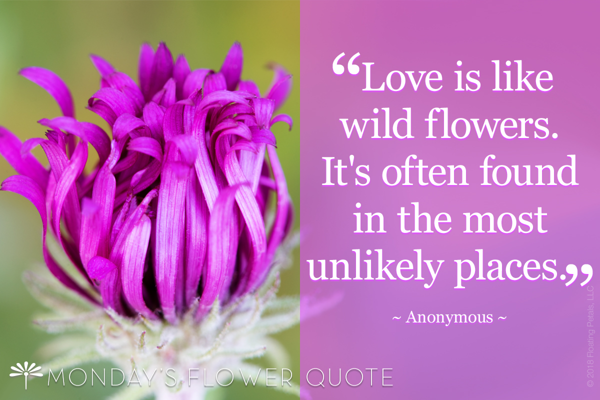 Love Is Like Wildflowers