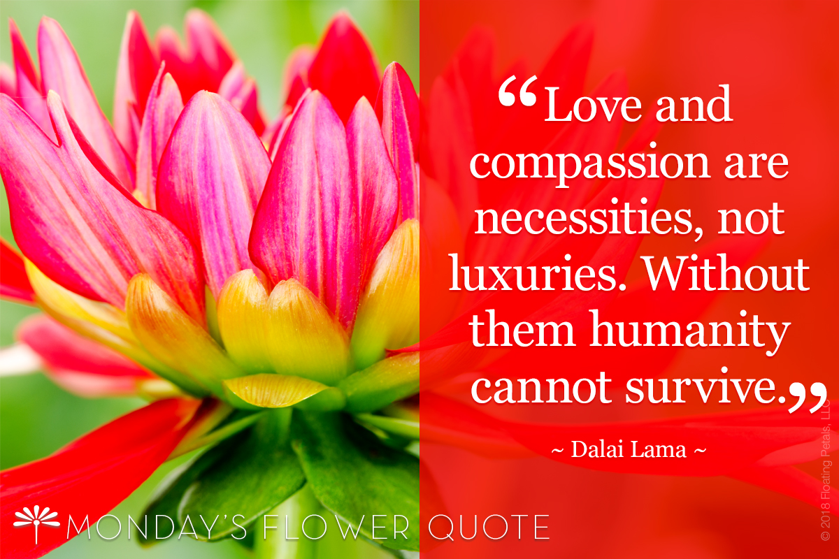 Love And Compassion Mondays Flower Quote Floating Petals