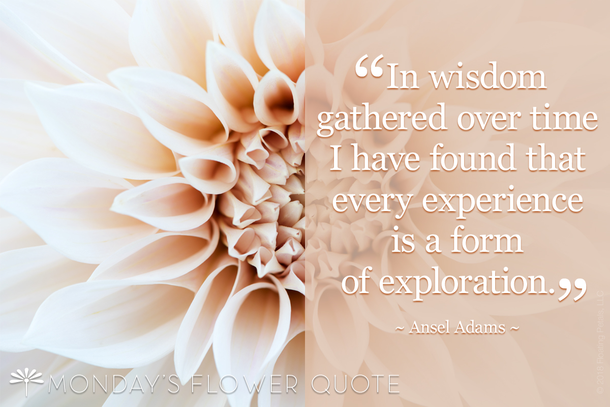 In Wisdom Gathered Over Time   Ansel Adams