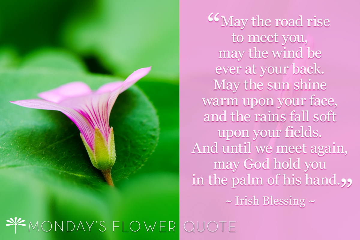 Mondays flower quote archives page 2 of 10 floating petals flower quote may the road rise to meet you izmirmasajfo Choice Image