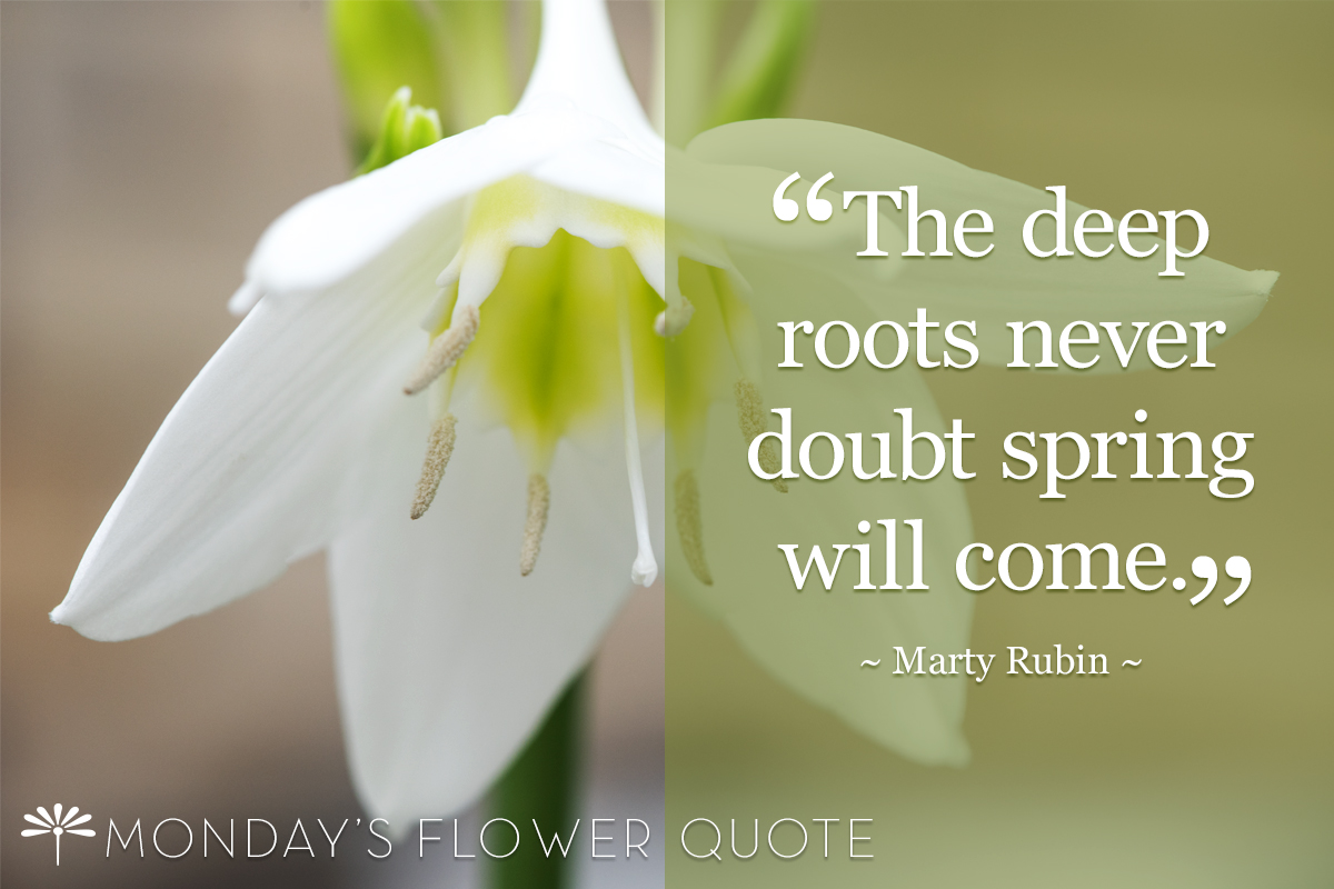 Flower Quote: The Deep Roots