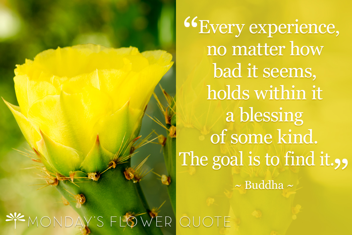 flowers every experience no matter how bad it monday s flower quote