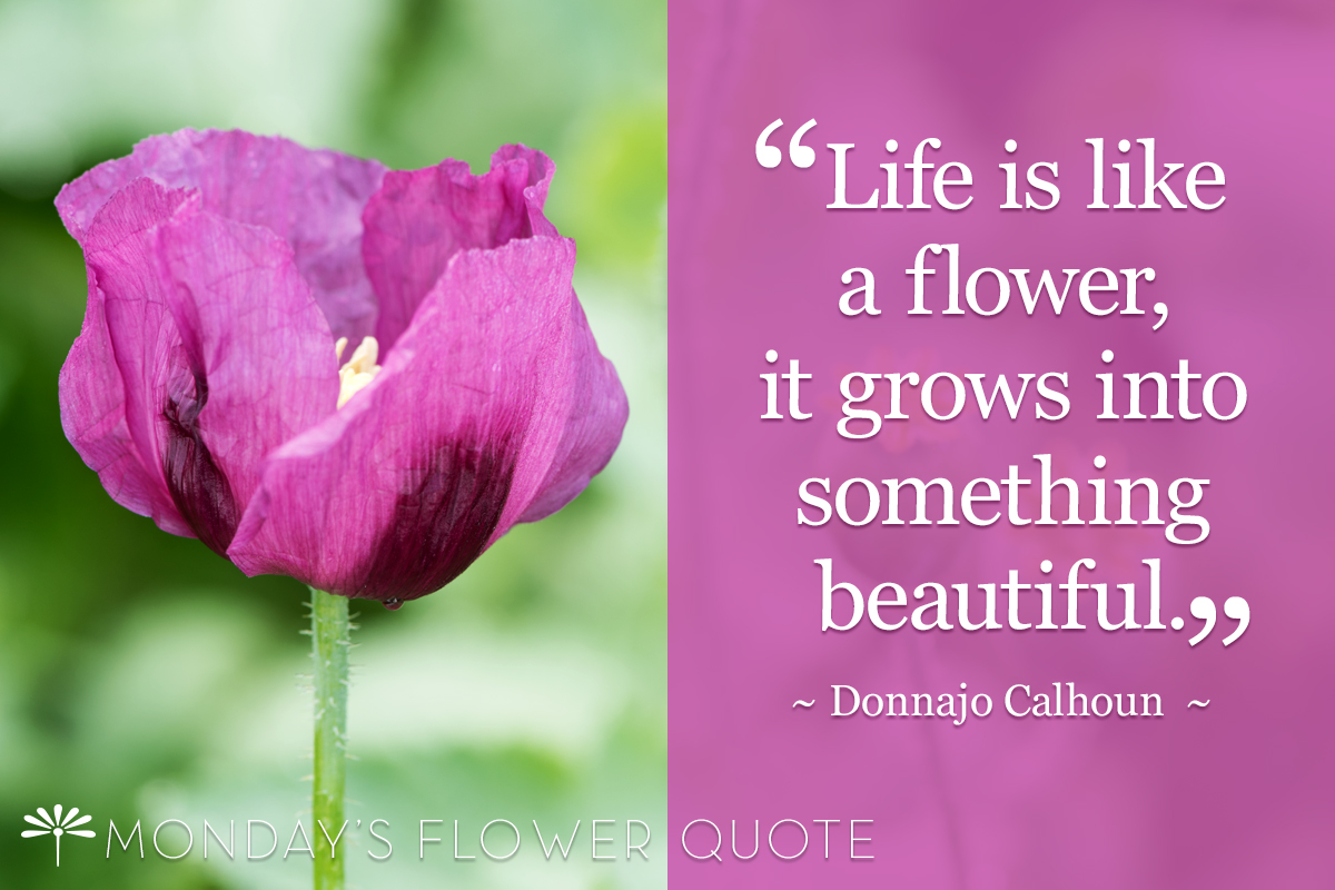 Life Is Like A Flower It Grows Into Something Beautiful Floating