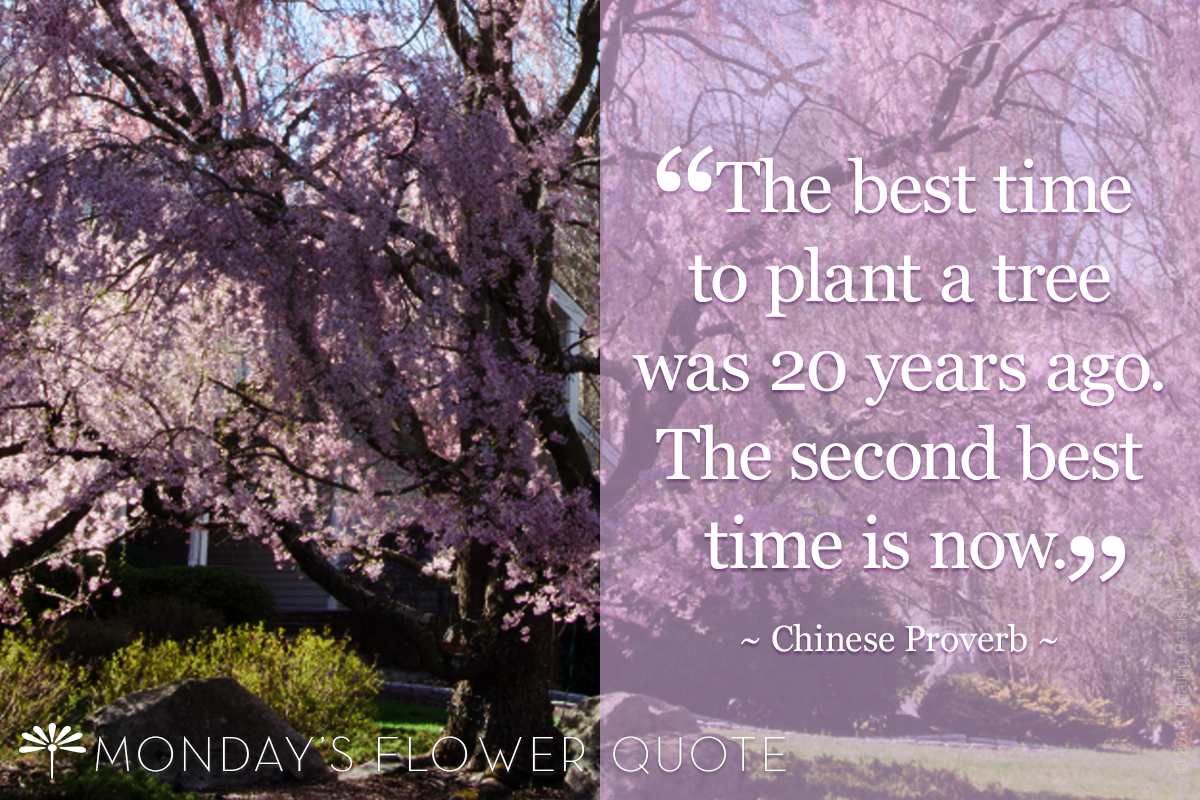 Flower Quote: The Best Time To Plant A Tree