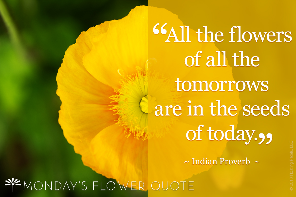 Flower Quote: All the Flowers