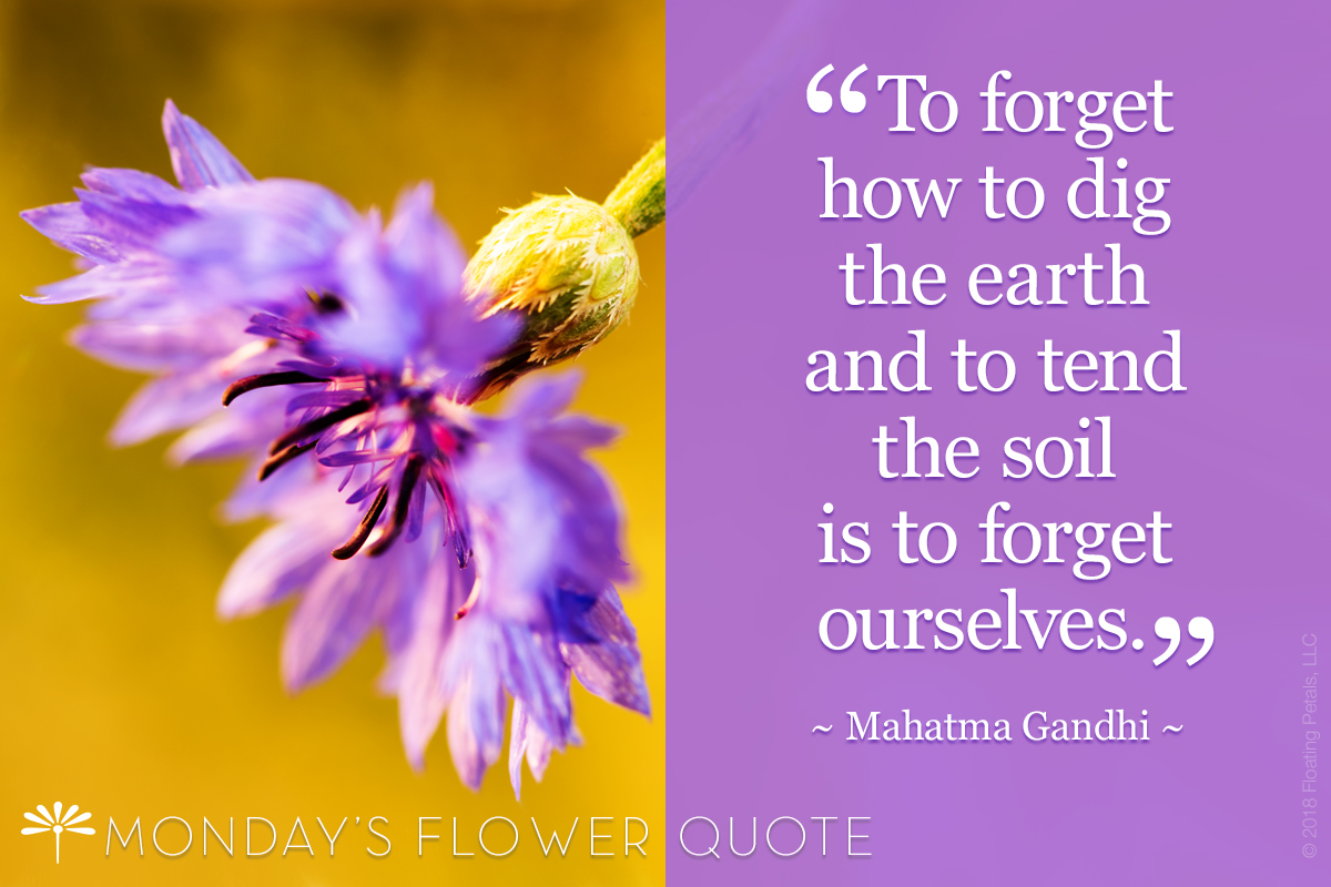Monday's Flower Quote: To Forget How To Dig