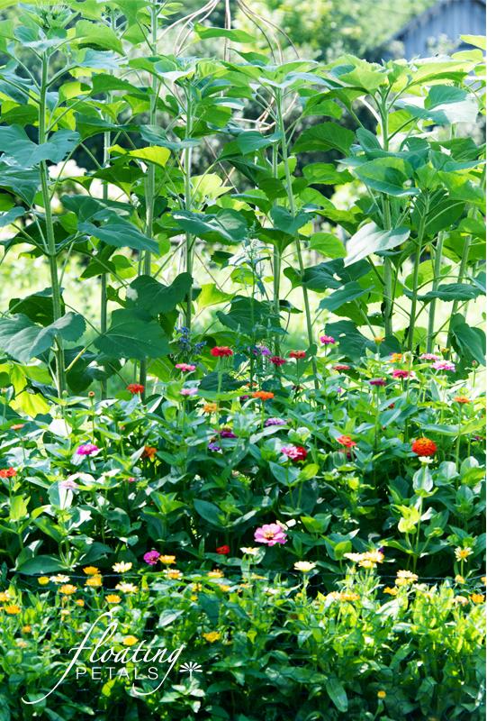 My Cutting Garden