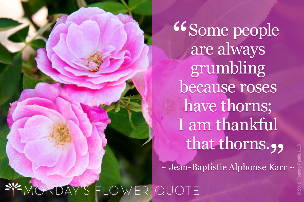 Monday's Flower Quote: Some people are always grumbling