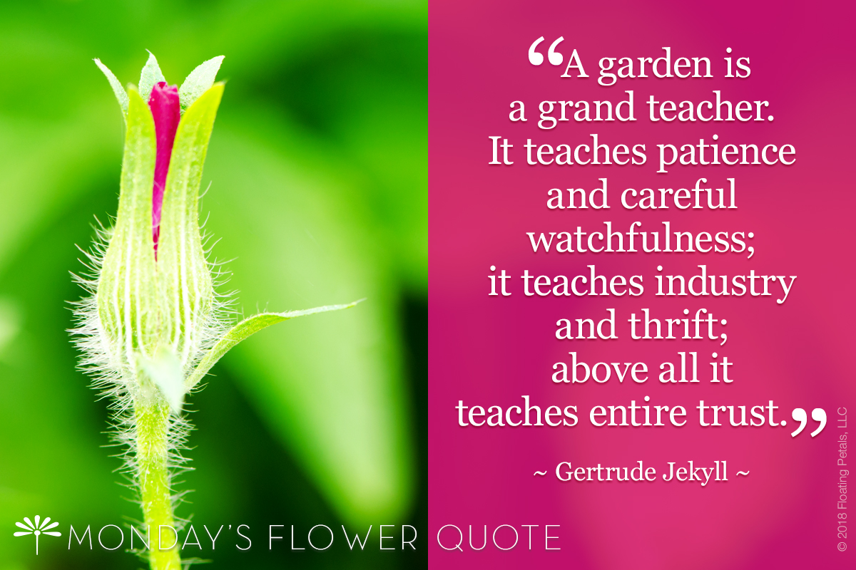 Flower Quote: A Garden is a Grand Teacher